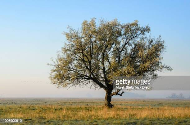 tree on field against clear sky - marek stefunko stockfoto's en -beelden