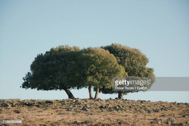 tree on field against clear sky - oskar stock pictures, royalty-free photos & images