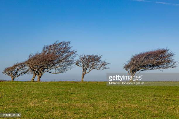 tree on field against clear sky - wind stock pictures, royalty-free photos & images