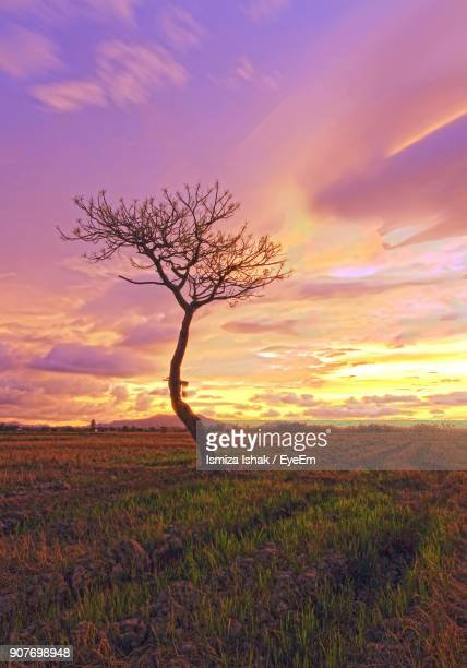 Tree On Field Against Cloudy Sky During Sunset