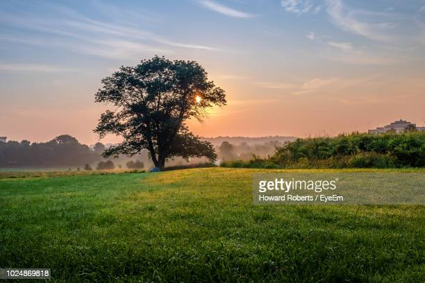tree on field against sky during sunset - montgomery county pennsylvania stock pictures, royalty-free photos & images