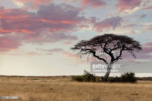 tree on field against sky during sunset - east stock pictures, royalty-free photos & images