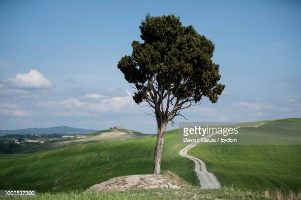 tree on field against sky - san quirico d'orcia stock pictures, royalty-free photos & images