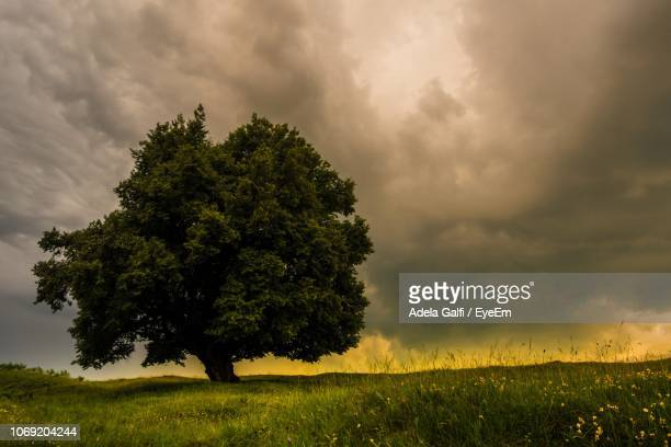 Tree On Field Against Sky