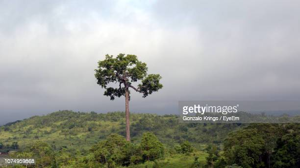 tree on field against sky - krings stock pictures, royalty-free photos & images