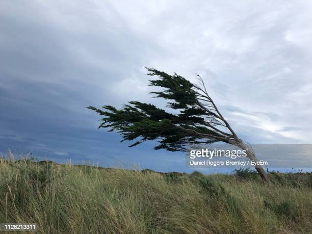 tree on field against sky - wind stock pictures, royalty-free photos & images