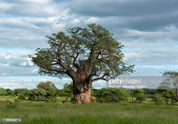 tree on field against sky - tarangire national park stock pictures, royalty-free photos & images
