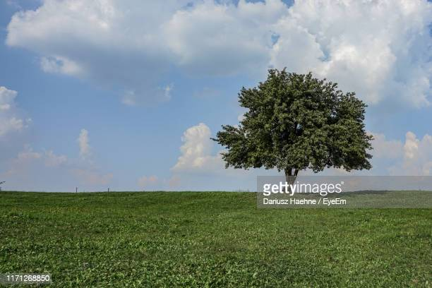 tree on field against sky - single tree stock pictures, royalty-free photos & images