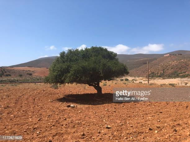tree on field against sky - argan tree stock pictures, royalty-free photos & images