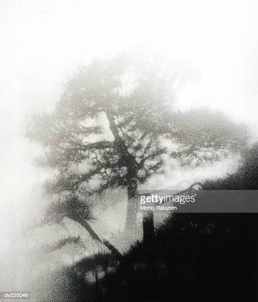 tree on foggy hillside - monty rakusen stock-fotos und bilder