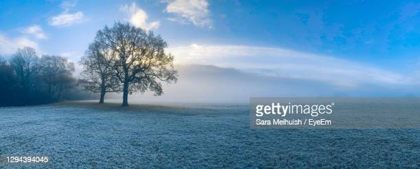 tree on frost covered field against sky and fog - day stock pictures, royalty-free photos & images