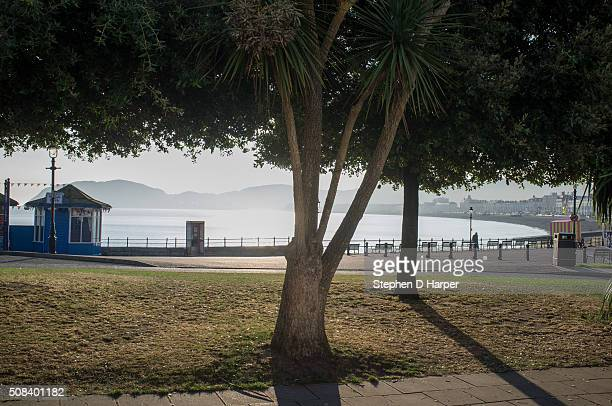 A tree on grass in front of the Llandudno Promenade