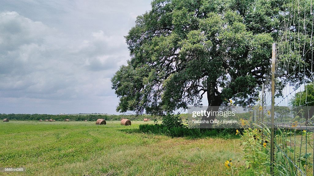 Tree On Grassy Field Against Cloudy Sky : Stock Photo
