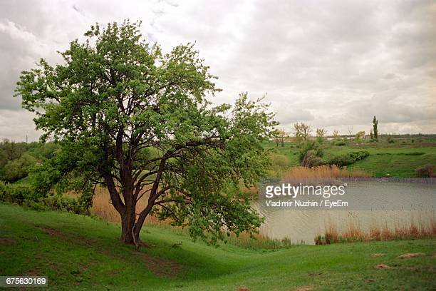 Tree On Grassy Field By River Against Cloudy Sky