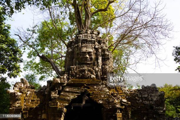 Tree on Kannon Bosatsu (Guan Yin Bodhisattva), Ta Som, Siem Reap, Cambodia