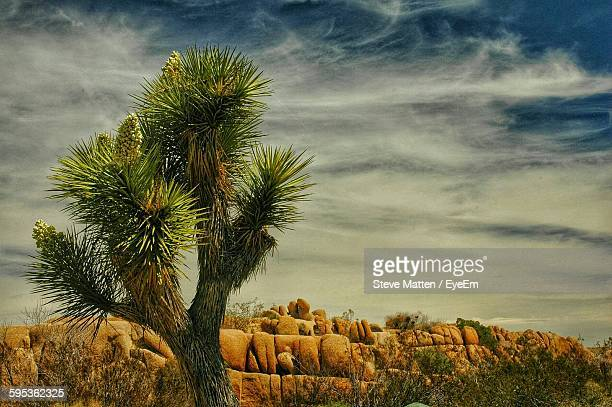 tree on landscape against cloudy sky - steve matten stock pictures, royalty-free photos & images