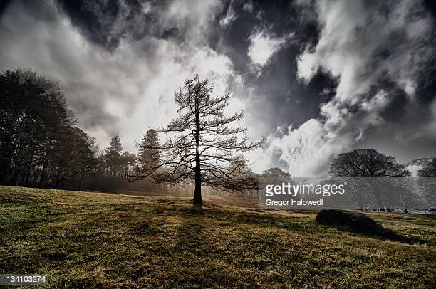 tree on landscape - liechtenstein stock pictures, royalty-free photos & images