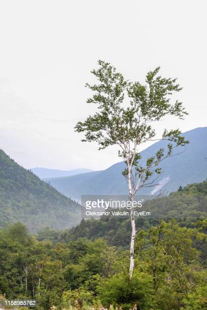 tree on mountain against sky - oleksandr vakulin stock pictures, royalty-free photos & images