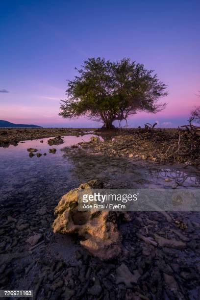 tree on rock against sky during sunset - ade rizal stock photos and pictures