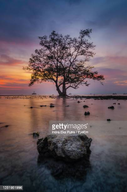 tree on rock by sea against sky during sunset - rock object photos et images de collection