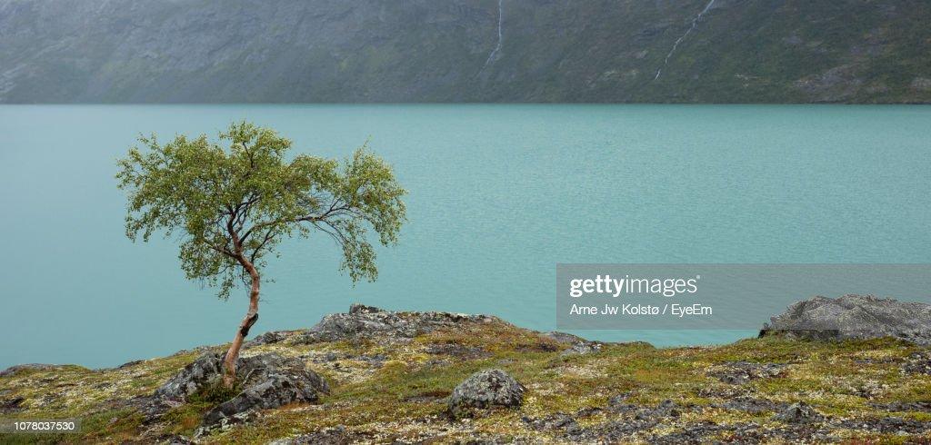 Tree On Rock By Sea : Foto de stock