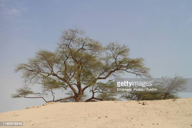tree on sand against clear sky - bahrain stock pictures, royalty-free photos & images