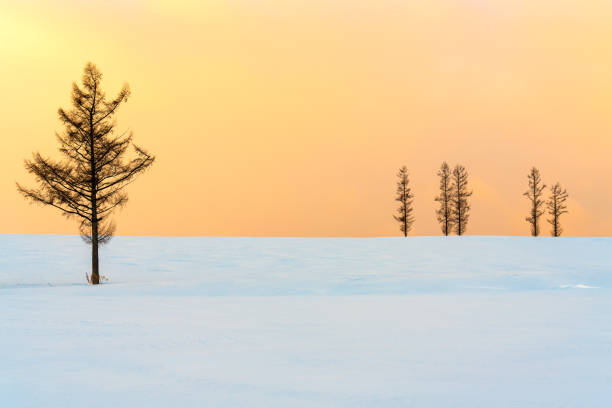 Tree On Snow Covered Field Against Sky During Sunset