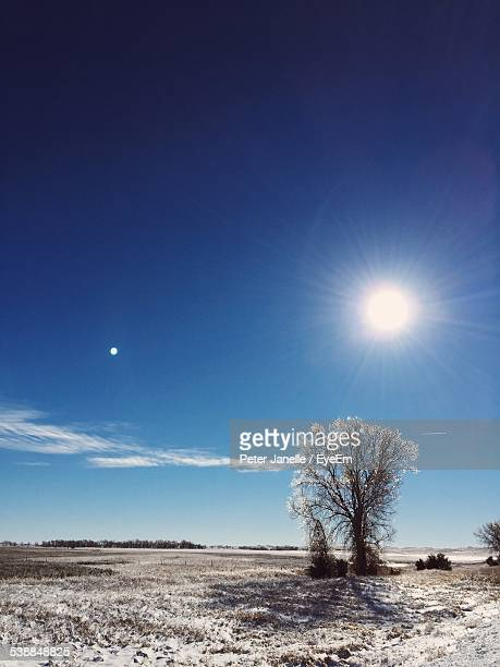 tree on snow covered field on sunny day - peter snow stock pictures, royalty-free photos & images