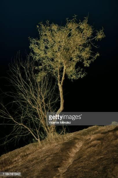 tree on the hill - vicente méndez fotografías e imágenes de stock