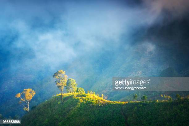 a tree on the hill - ayuthaya province stock pictures, royalty-free photos & images