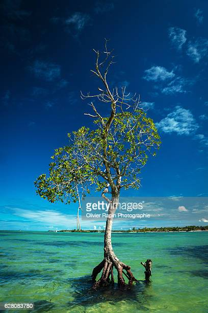 Tree on the Indian ocean