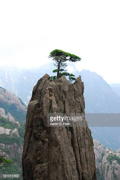 Tree on top of very steep Huangshan Mountain