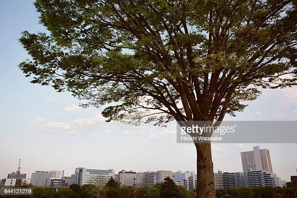 Tree overlooking the town
