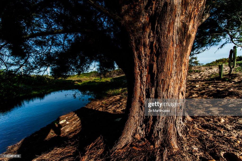 tree : ストックフォト