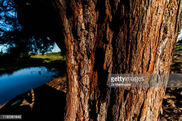 tree - figura para recortar stock pictures, royalty-free photos & images