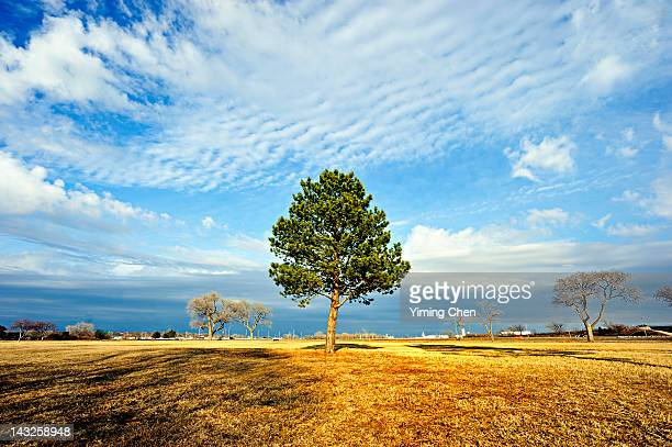 tree - lincoln nebraska stock pictures, royalty-free photos & images