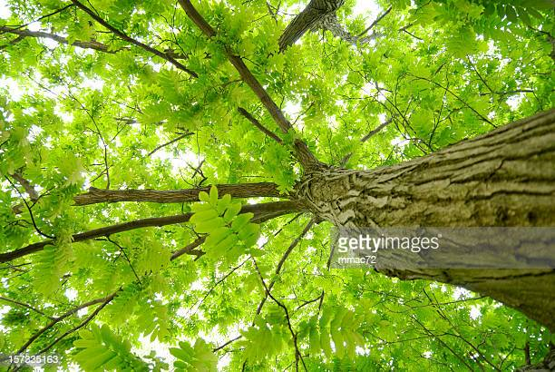 tree - carbon dioxide stock photos and pictures
