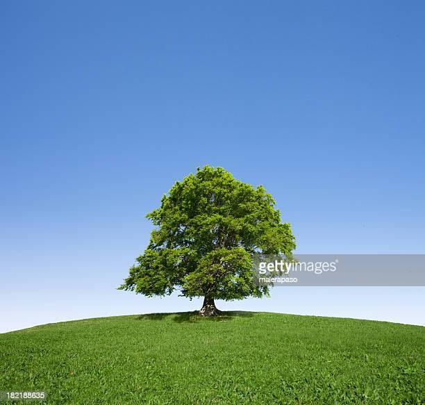 tree - laubbaum stock-fotos und bilder