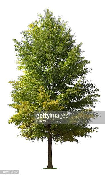 tree - single tree stock pictures, royalty-free photos & images