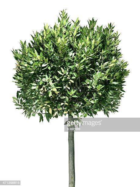 Tree (Klicken Sie hier, um weitere Informationen)