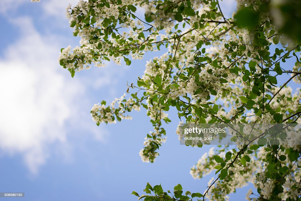 Tree : Stock Photo
