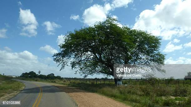 tree - sem fim... valéria del cueto stock pictures, royalty-free photos & images