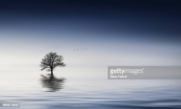 tree - dawn bess stock pictures, royalty-free photos & images