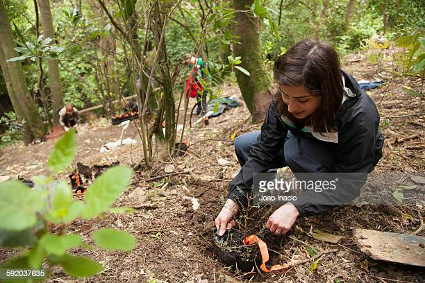 tree planting - planting stock pictures, royalty-free photos & images