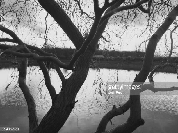 tree pond - reid,_wisconsin stock pictures, royalty-free photos & images