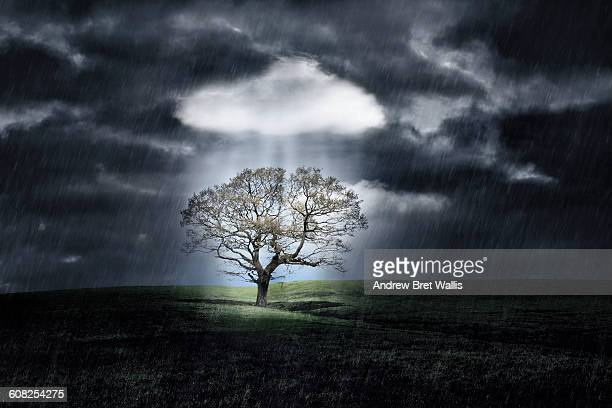 tree protected from a storm by a white cloud - emergency shelter stock pictures, royalty-free photos & images