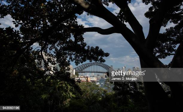 A tree provides shade in North Sydney with the city and harbour bridge in the background on April 9 2018 in Sydney Australia Sydney has been...