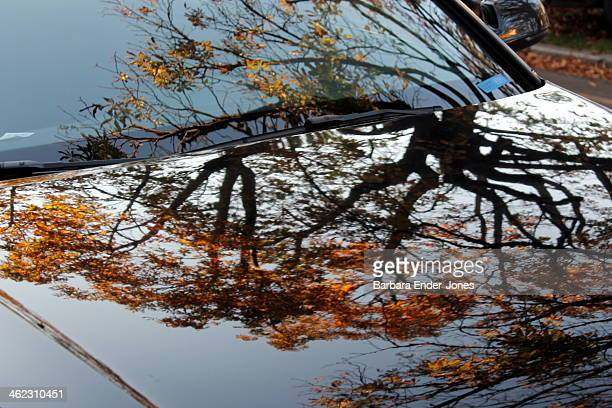 tree reflected in car