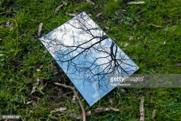 tree reflected in the mirror - viewpoint stock pictures, royalty-free photos & images