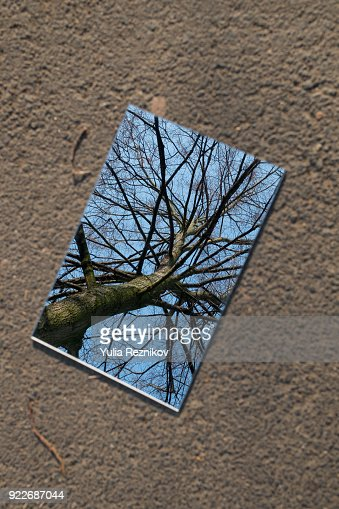 Tree reflected in the mirror